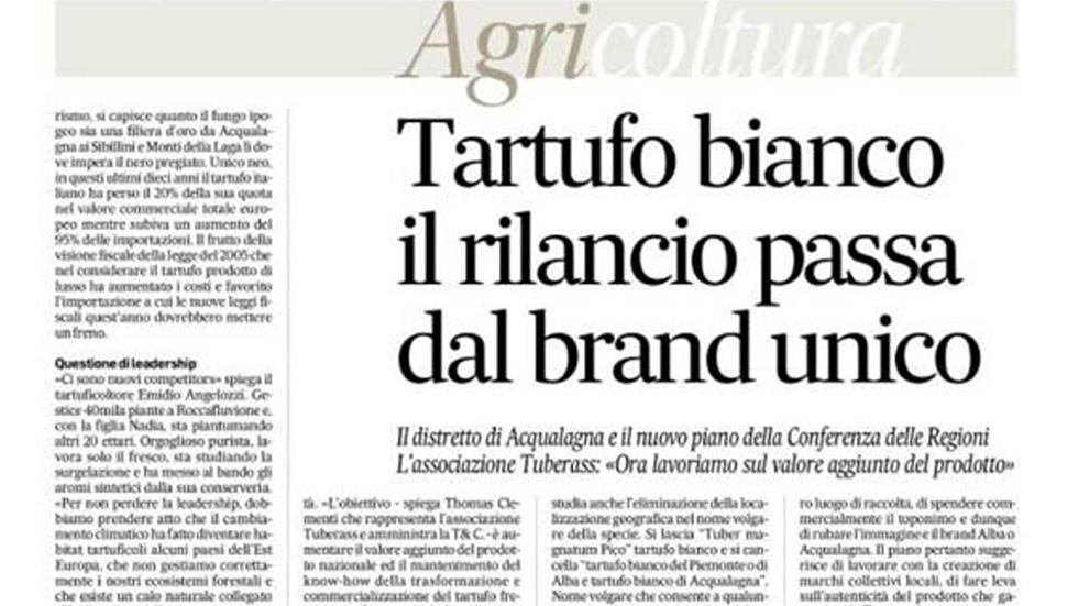 Corriere Adriatico Il Tartufo Bianco Pregiato Di Acqualagna